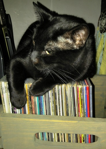 kitty 2.jpg